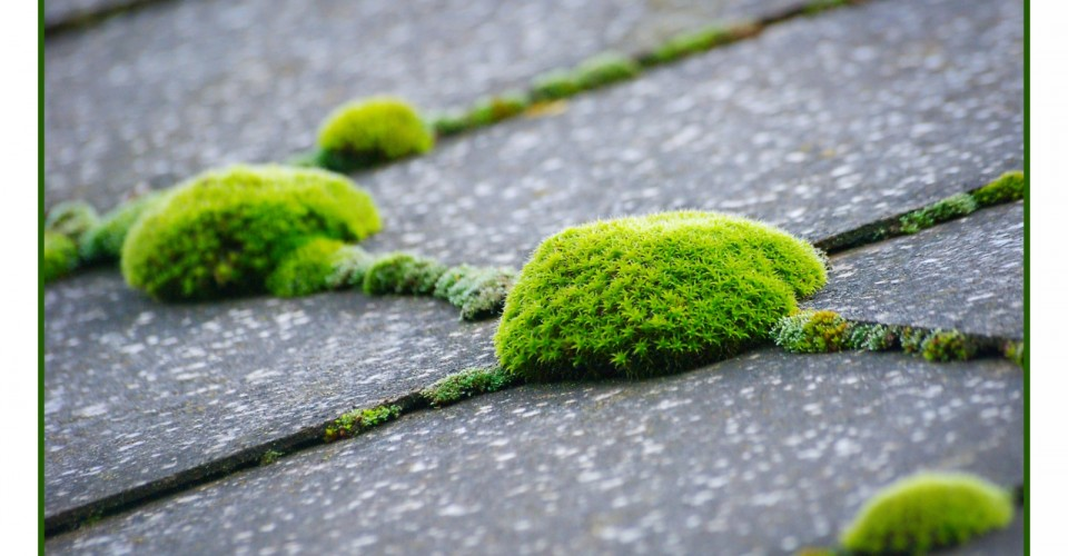 moss-on-your-roof-outdoor-cleaner