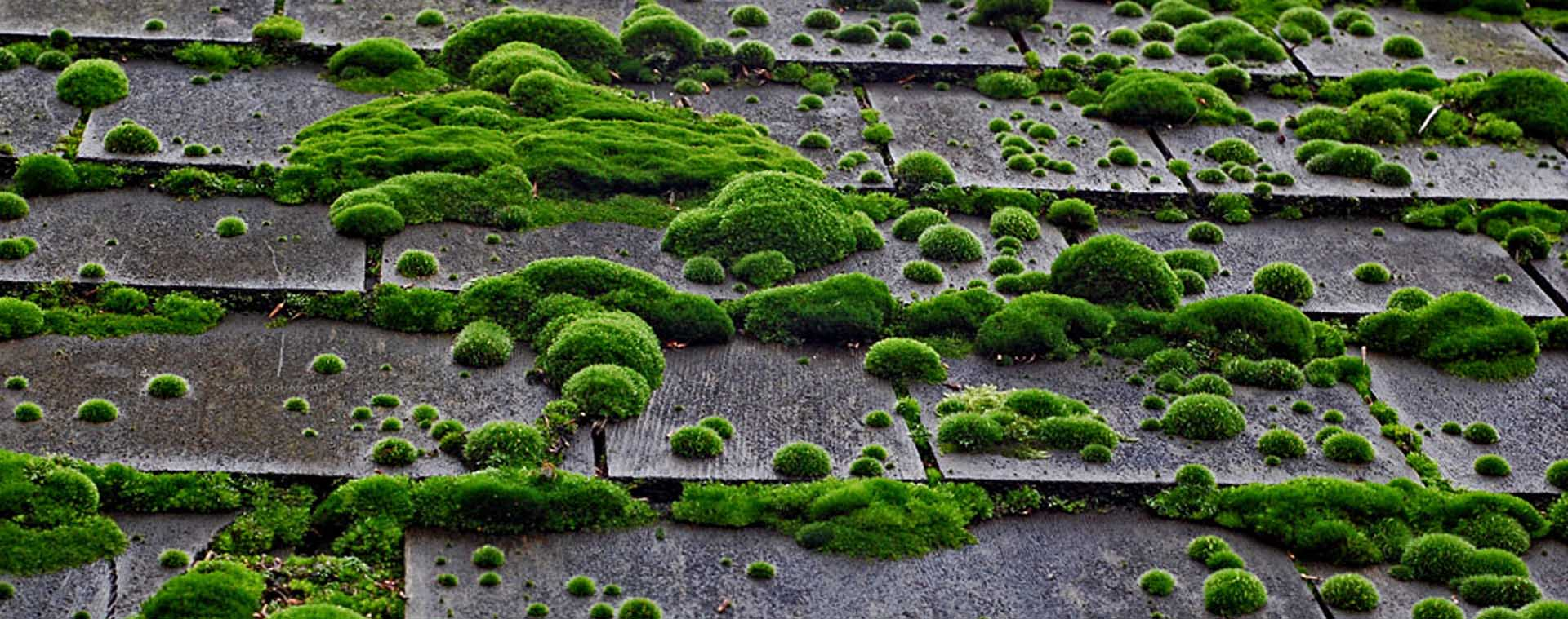 roof-moss-slider-home-30-seconds